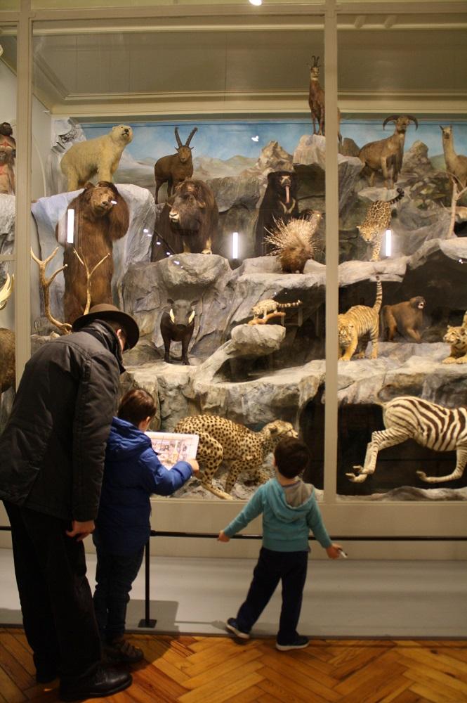 Salle des mammifères