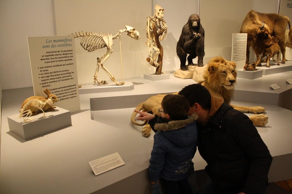 Jour de pluie, go to the musée d'Histoire Naturelle de Lille !