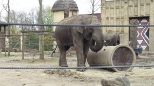 éléphant bellewaerde